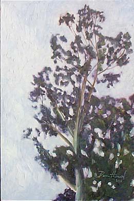 eucalyptise_1